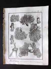 Diderot 1780's Antique Medical Print. Anatomie 08 Anatomy